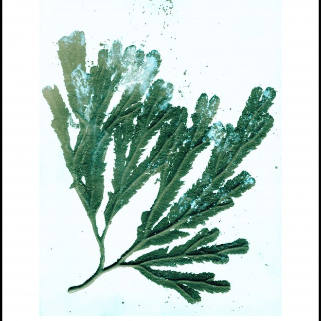 _50x70.seaweed.seagreen